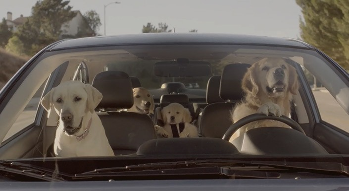 Keep Your Pets Safe and Happy While in Your Subaru for a Bay City Drive